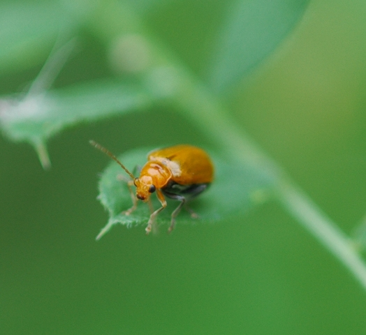 insect1_080524""