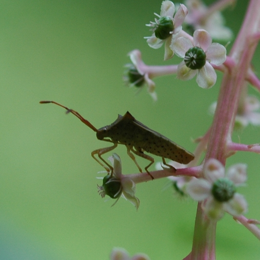 unknowninsect090531_1